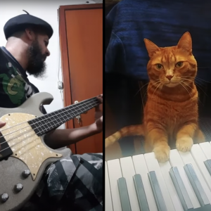Bass player with cat on piano.